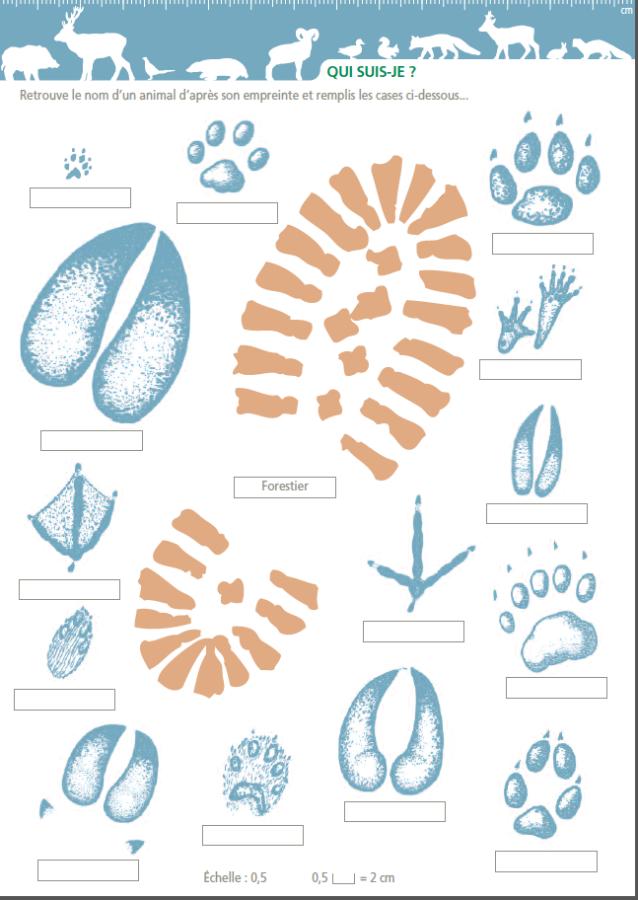 Identifier les espèces